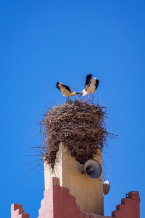 The silly storks making their nests
