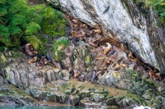 A herd of sea lions all perched on this one ledge - count how many!
